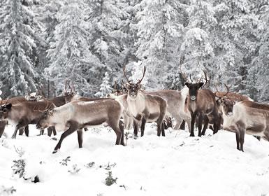 Lapónia Finlandesa e Pai Natal Essencial