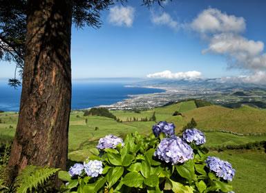 Açores: São Miguel, Terceira, Faial e Ilha do Pico Em Detalhe