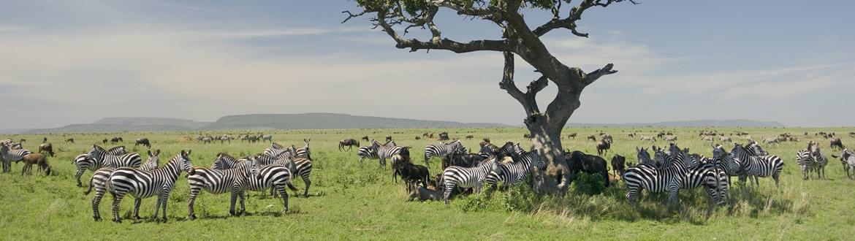 Quénia e Tanzânia: Safari no Quénia e Tanzânia, circuito clássico