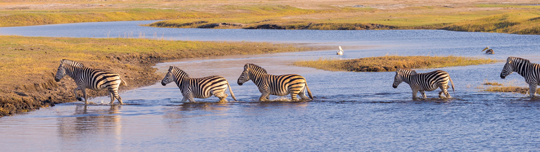 Circuito Zanzibar : Quénia tanzânia e ilhas do Índico: safari no quénia tanzânia e