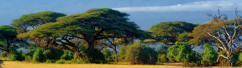 Circuito Zanzibar : Quénia e ilhas do Índico maasai mara naivasha amboseli