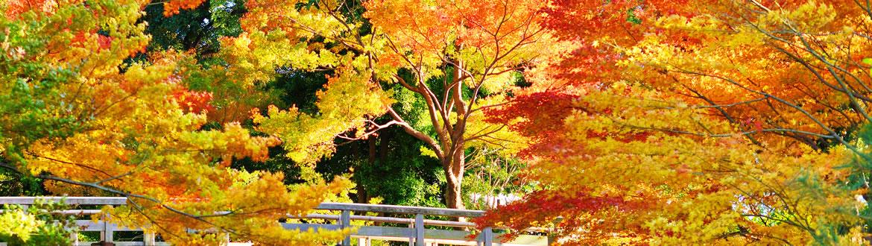 Japão: Do Sul ao Norte do Japão, circuito clássico